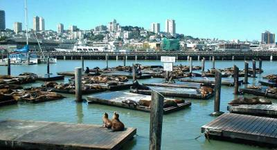 Pier 39 Sea Lions, Visit San Francisco