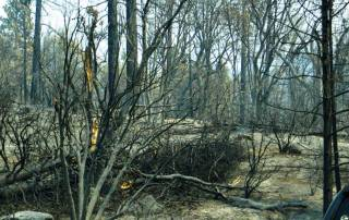 Rim Fire Burned Area, Yosemite Rim Fire Visit