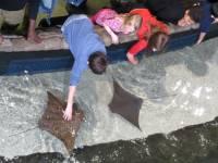 Shark and Ray Touching Pool, Georgia Aquarium