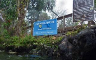 Three Sisters Springs, Crystal River Manatee Snorkel