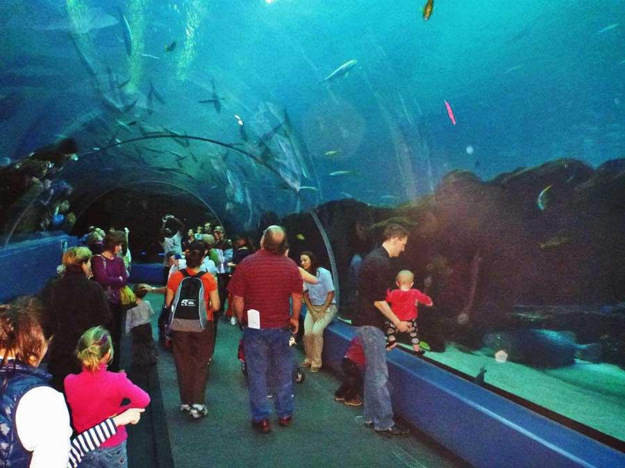 Tunnel through Open Ocean Exhibit, Georgia Aquarium