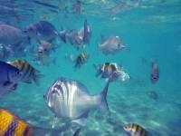 Tropical Fish, Gran Bahia Principe Tulum