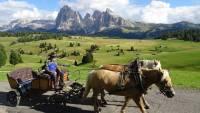 Horse Drawn Wagon, Alpe di Siusi, Hiking the Dolomites