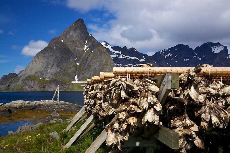 Traditional Fish Drying, Reine, Lofoten Islands