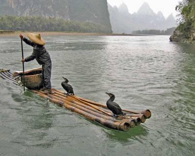 Fisherman with Cormorants, Li River, Visit Guilin