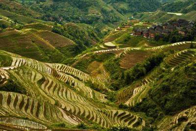 Longji Rice Terraces near Guilin