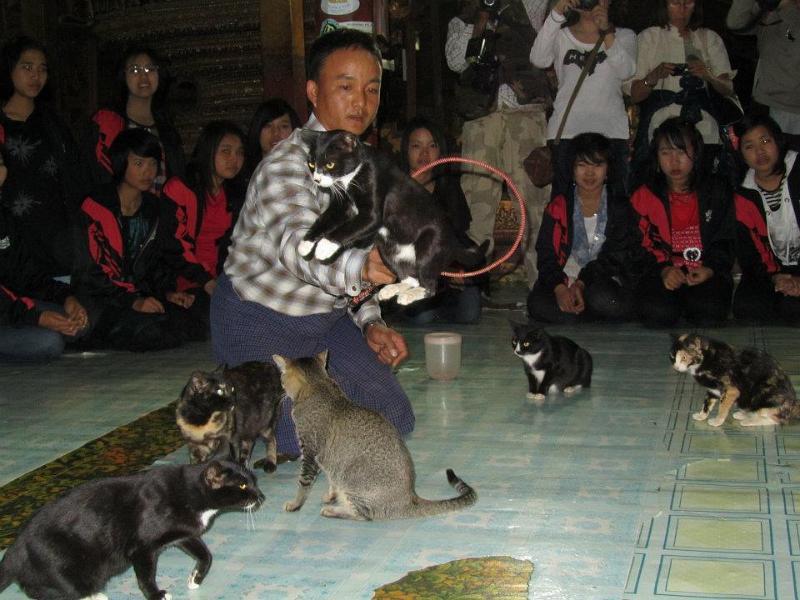 Jumping Cat Monastery, Inle Lake, Visit Myanmar