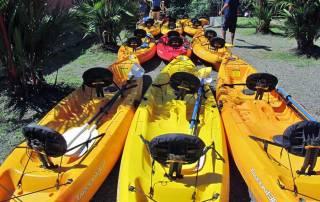 Mangrove Kayaking near Manuel Antonio Park, Costa Rica Tour