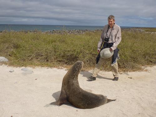 North Seymour, Galapagos, Tim
