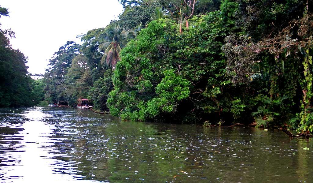 Tortuguero Canals, Puerto Limon Shore Excursion