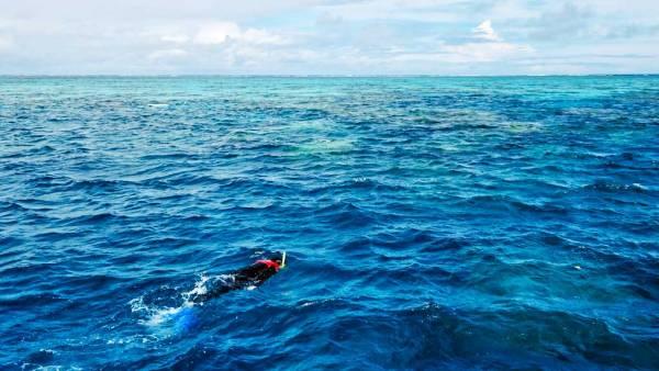 Snorkel Norman Reef, Great Barrier Reef