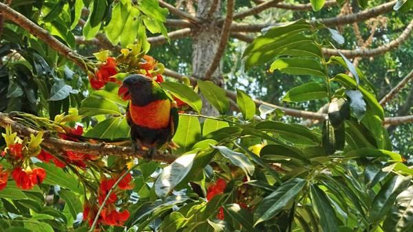 Wild Birds, Royal Botanic Gardens, Sydney Visit