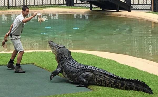 Australia Zoo Crocodile, Brisbane