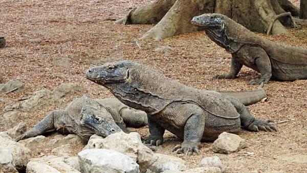 Komodo Island Shore Excursion