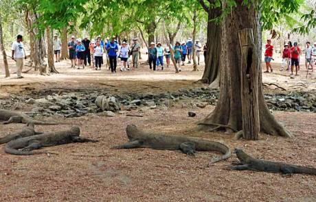 Tourists Approaching Komodo Dragons