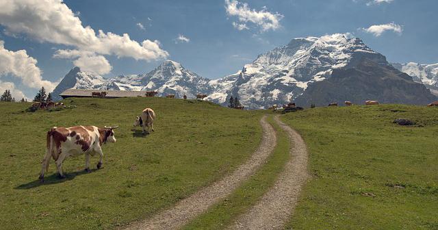 Panorama Trail, Mannlichen